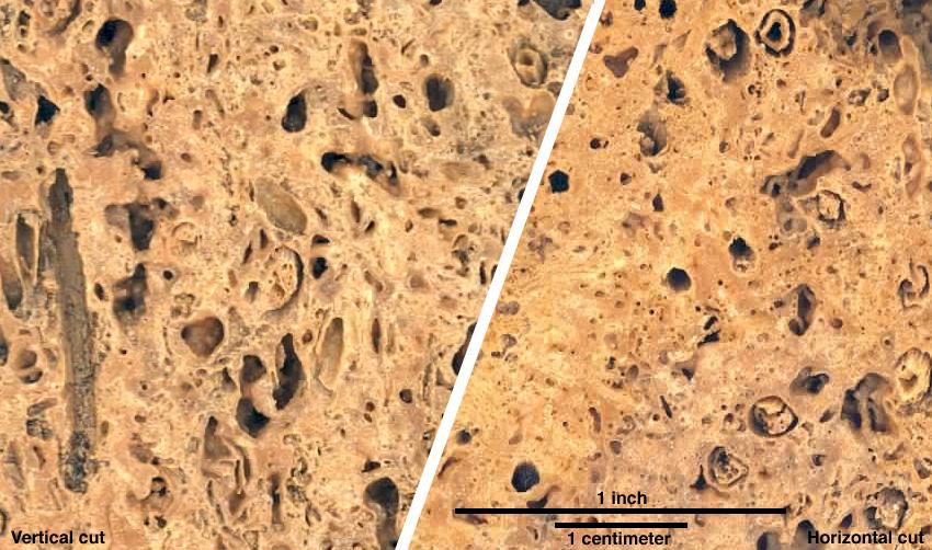 Duplex Image of cut surfaces