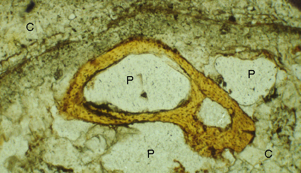 Speleothem Image